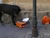 Chien des rues Aix-en-Provence