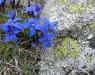 fleur_et_lichen.jpg